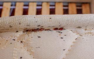 Bed Bug markings